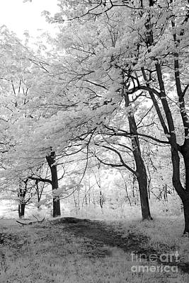 Nature Infrared Photograph - Surreal Infrared Black White Nature Trees - Haunting Black White Trees Nature Infrared by Kathy Fornal