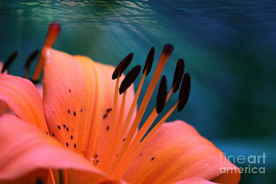 Surrealism Royalty-Free and Rights-Managed Images - Surreal Orange Lily by Carol Groenen