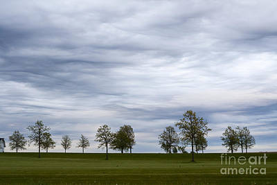 Photograph - Surreal Trees And Cloudscape by Sharon Foelz