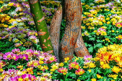 Colorful Flowers Photograph - Surrounded by Az Jackson