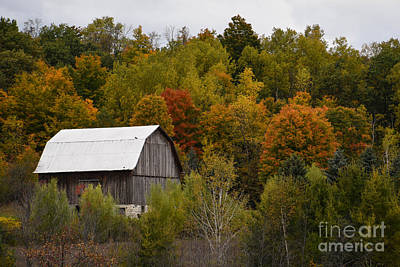 Photograph - Surrounded By Fall by Grace Grogan