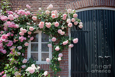 Photograph - Surrounded By Roses by Aiolos Greek Collections