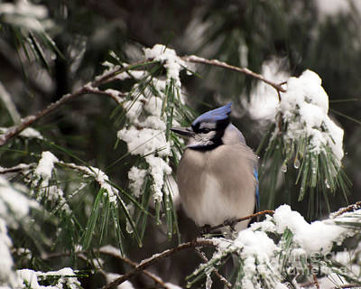 Photograph - Surrounded By Snow  by Kerri Farley
