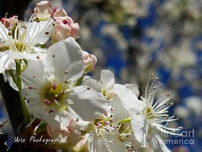 Photograph - Surrounding Beauty by Maria Urso