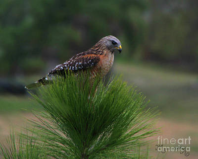 Photograph - Surveying His Domain by Mariarosa Rockefeller