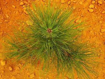 Georgia Red Clay Photograph - Survival Of The Tall Pine by Jan Gelders