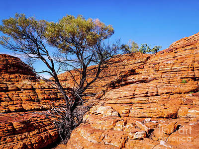 Photograph - Surviving In The Cracks - Kings Canyon, Australia by Lexa Harpell