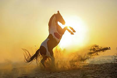 Photograph - Surya Namaskar. Sun Salutation by Ekaterina Druz