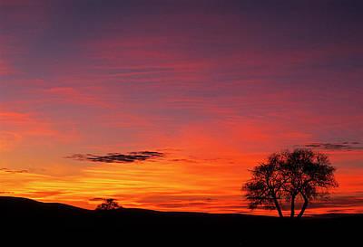 Photograph - Susies Tree II by Doug Davidson