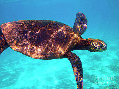 Hawaiian Green Sea Turtle Photograph - Suspended In Turquoise by Bette Phelan