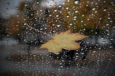 Digital Art - Suspended Leaf by Patrick Groleau