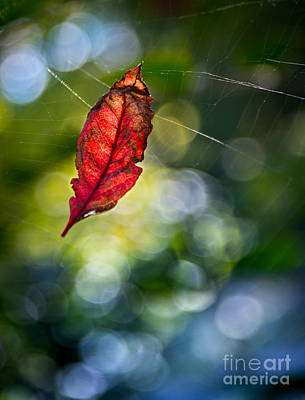 Photograph - Suspended by Michael Arend
