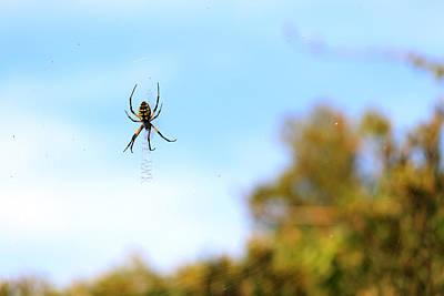 Suspended Spider Art Print