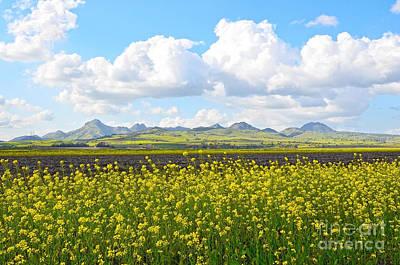 California Photograph - Sutter Buttes Mustard Flower by Michelle Zearfoss