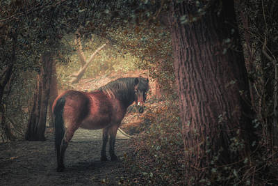 Sutton Photograph - Sutton Pony by Chris Fletcher
