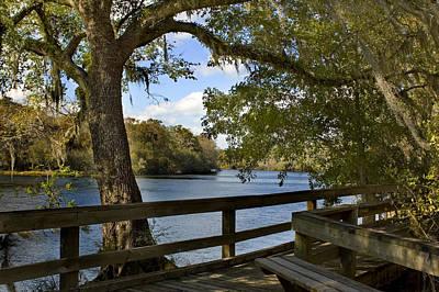 Suwannee River Photograph - Suwannee River Boardwalk by Stacey Lynn Payne