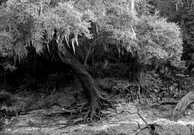 Photograph - Anderson's Tree by Julie Pappas