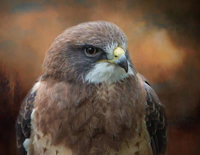 Photograph - Swainson Hawk by Marilyn Wilson
