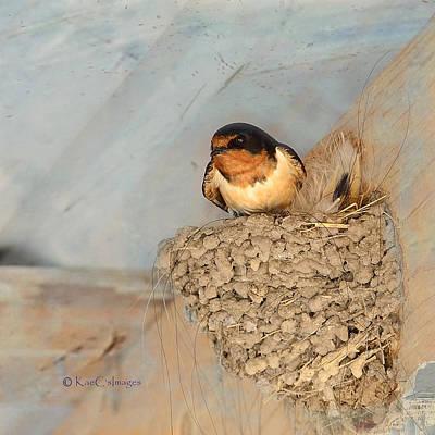 Swallow Digital Art - Swallow On Nest by Kae Cheatham