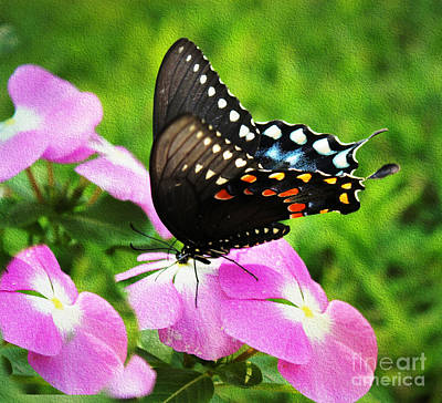 Photograph - Swallow Tail Butterfly by Judy Palkimas