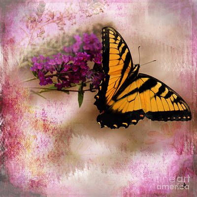 Photograph - Swallow Tail Full Of Beauty by Sandra Clark