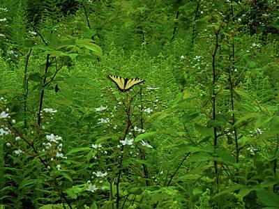 Photograph - Swallow Tail On Wildflowers by Raymond Salani III