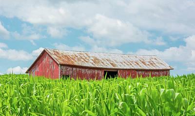 Photograph - Swallowed In Corn by Patti Raine