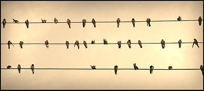Photograph - Swallows On Wires by Radoslav Nedelchev