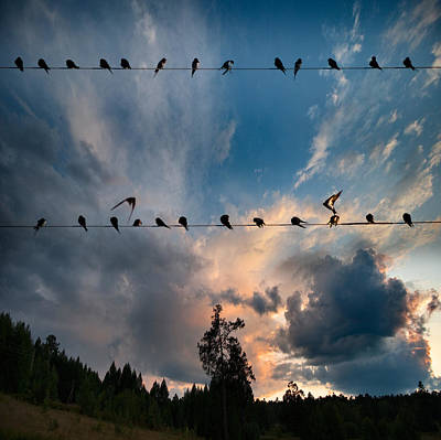 Art Print featuring the photograph Swallows by Vladimir Kholostykh