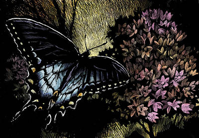 Wall Art - Drawing - Swallowtail 1 by Laurie Musser