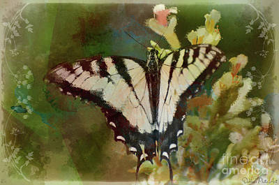 Photograph - Tiger Swallowtail Butterfly 1 by Debbie Portwood