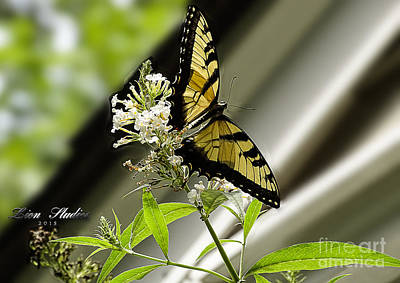 Photograph - Swallowtail Butterfly 1 by Melissa Messick