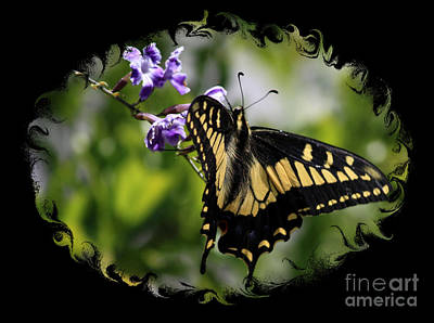 Spring Scenes Photograph - Swallowtail Butterfly 2 With Swirly Framing by Carol Groenen