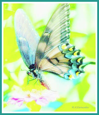 Digital Art - Swallowtail Butterfly by A Gurmankin