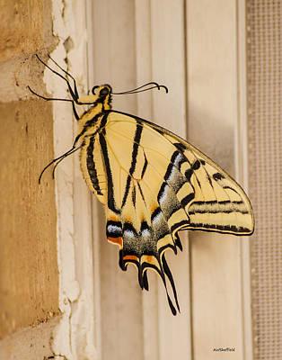 Photograph - Swallowtail Butterfly by Allen Sheffield