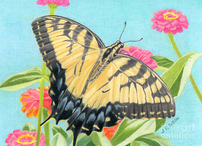 Swallowtail Butterfly And Zinnias Print by Sarah Batalka