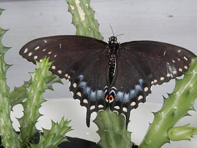 Photograph - Swallowtail Butterfly Beauty by Belinda Lee