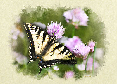 Photograph - Swallowtail Butterfly Blank Note Card by Christina Rollo