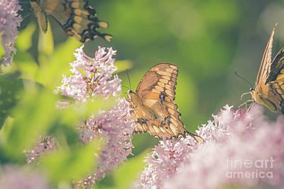 Photograph - Swallowtail Butterfly Heaven by Cheryl Baxter