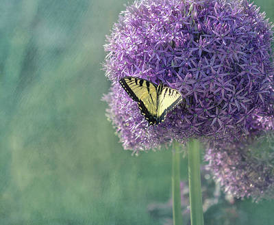 Photograph - Swallowtail Butterfly In The Garden by Kim Hojnacki