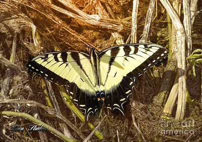 Photograph - Swallowtail Butterfly by Melissa Messick