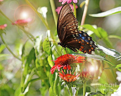 Photograph - Swallowtail Butterfly On Cone Flower by Luana K Perez