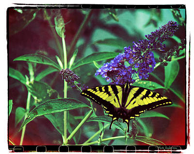 Photograph - Swallowtail Fantasy by Mick Anderson