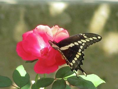 Photograph - Swallowtail - Follow Me 02 by Pamela Critchlow