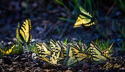 Photograph - Swallowtail Herd by Rikk Flohr