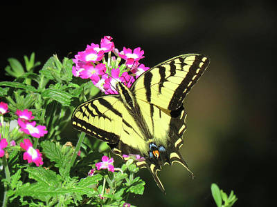 Photograph - Swallowtail In The Garden 1 - Visions Of Spring by Brooks Garten Hauschild