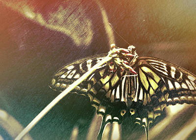Photograph - Swallowtail by JAMART Photography