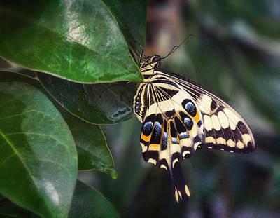 Photograph - Swallowtail On A Leaf  by Saija Lehtonen