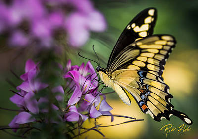 Photograph - Swallowtail On Blossoms by Rikk Flohr