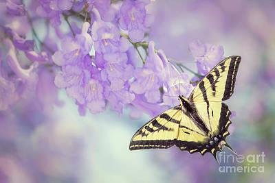 Swallowtail On Purple Flowers Art Print